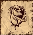 Vintage rose bud sketch vector