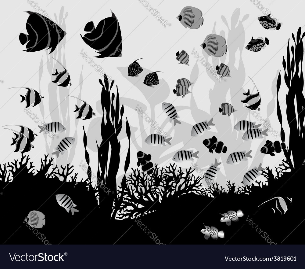 Coral fish vector | Price: 1 Credit (USD $1)
