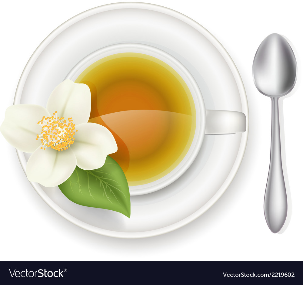 Jasmine tea vector | Price: 1 Credit (USD $1)