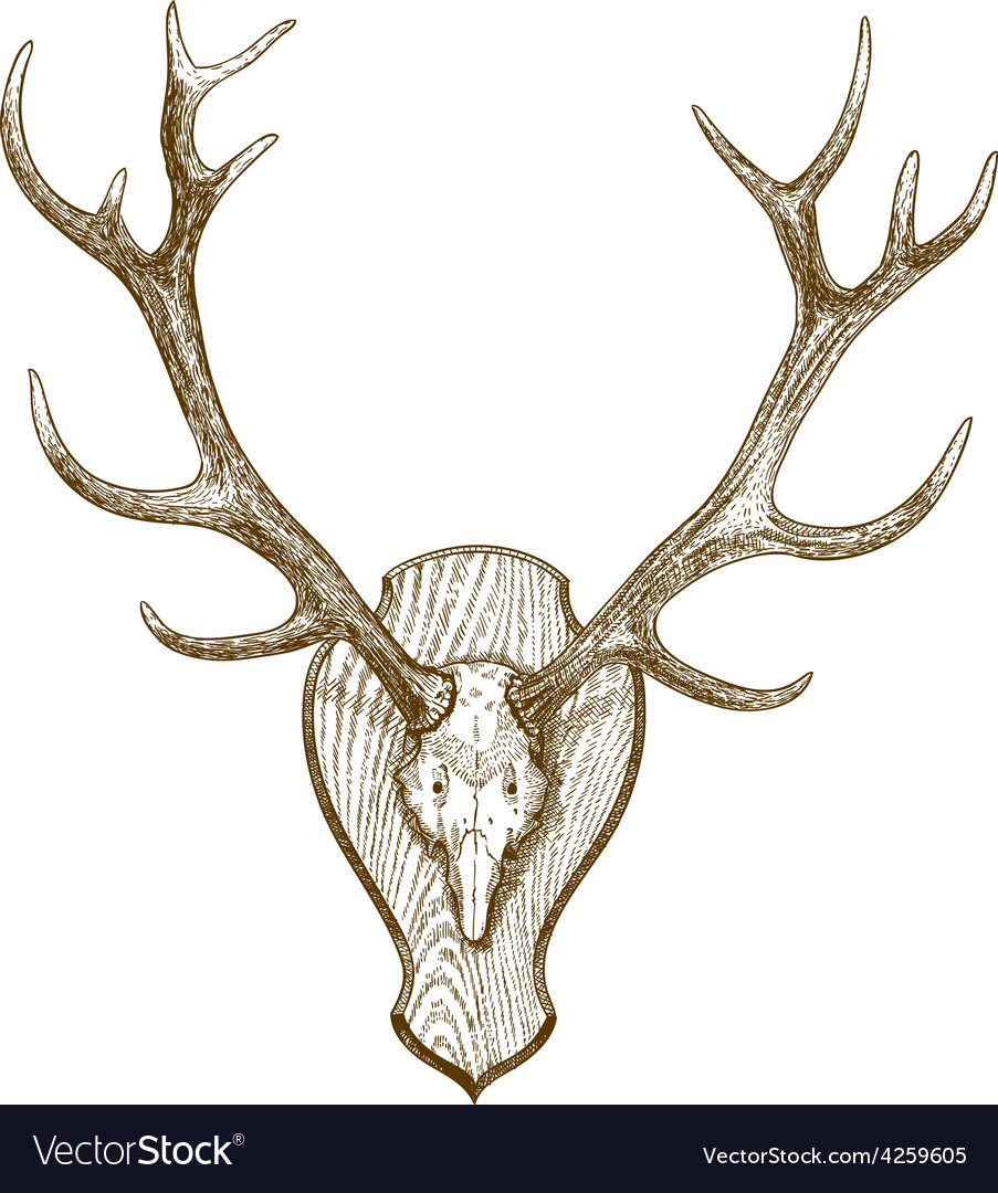 Engraving deer skull with horns vector | Price: 1 Credit (USD $1)