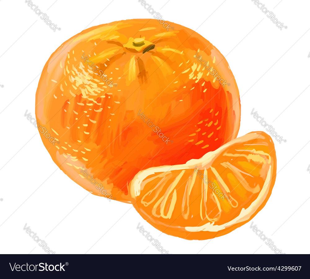 Picture of mandarin vector   Price: 3 Credit (USD $3)