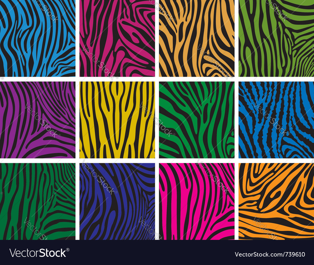 Colorful skin textures of zebra vector | Price: 1 Credit (USD $1)