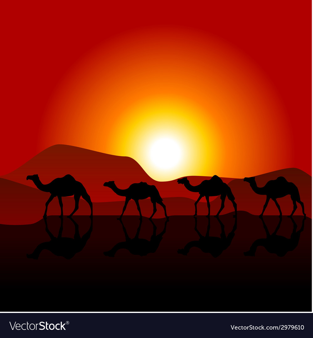 Silhouettes of caravan of camels on desert sunset vector | Price: 1 Credit (USD $1)