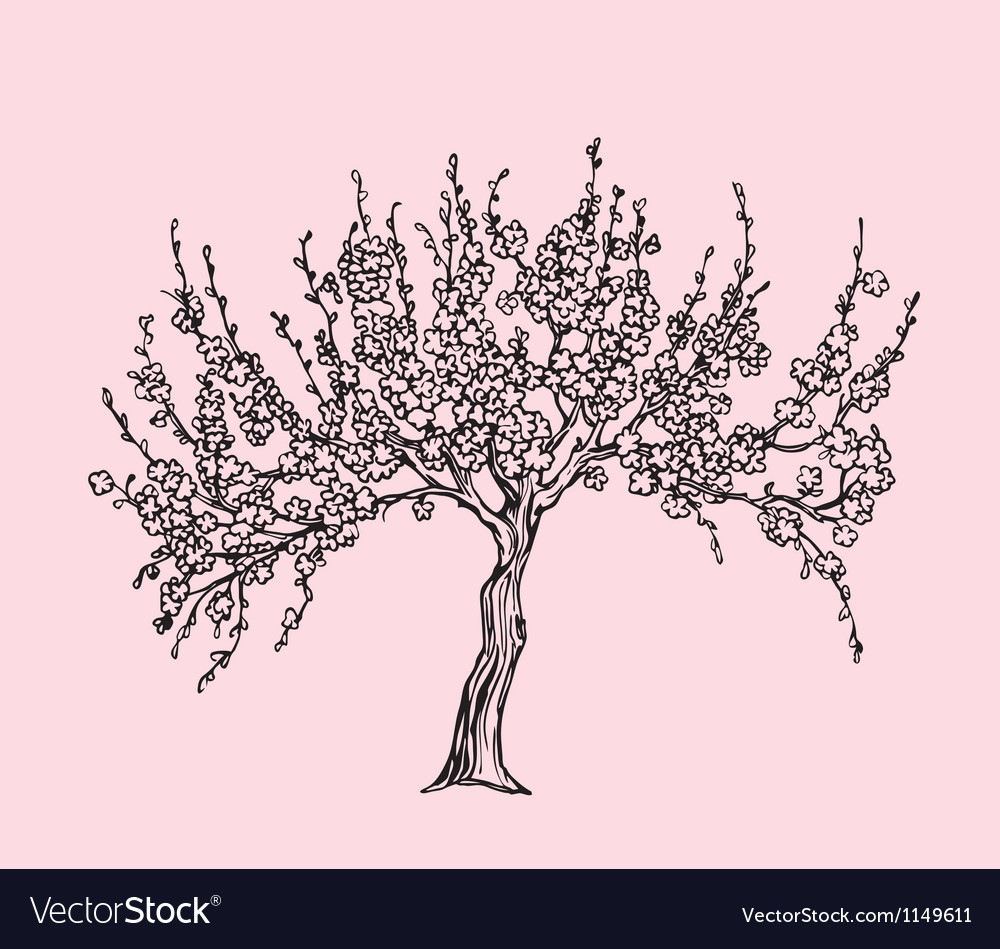 Hand drawn sakura with blossom in line style vector