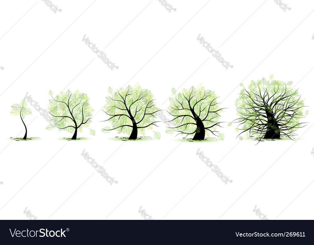 Life growth stages vector | Price: 1 Credit (USD $1)