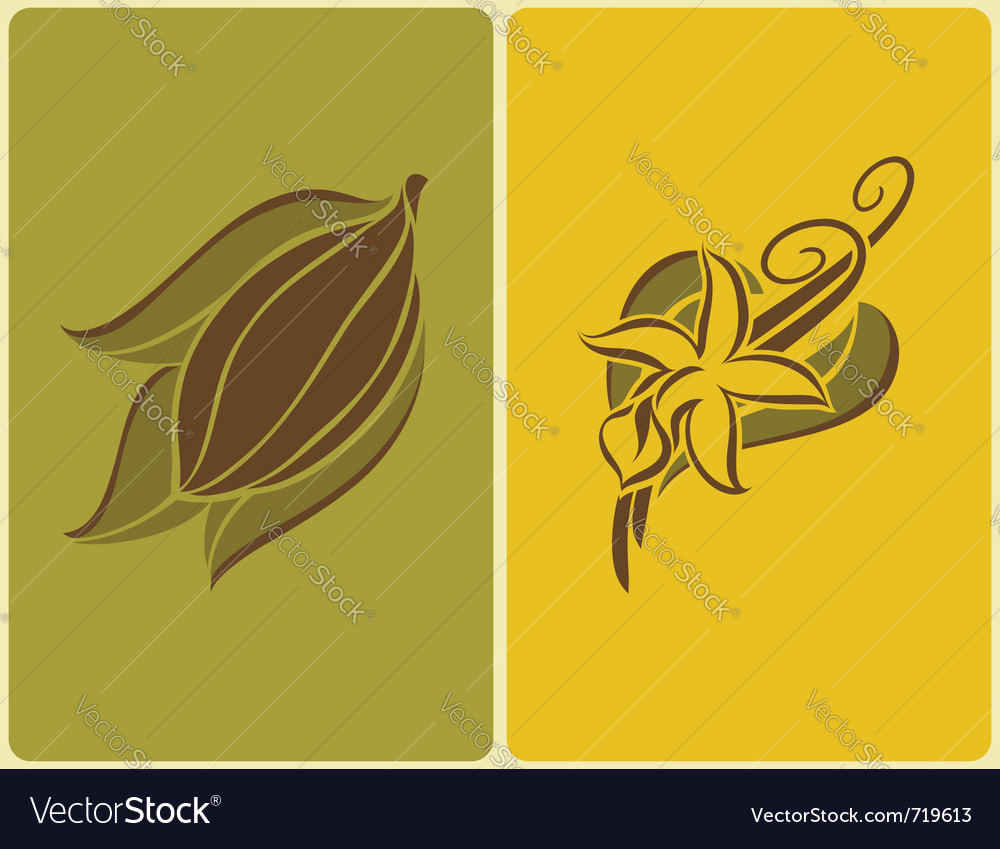 Cocoa bean and vanilla pods vector | Price: 1 Credit (USD $1)