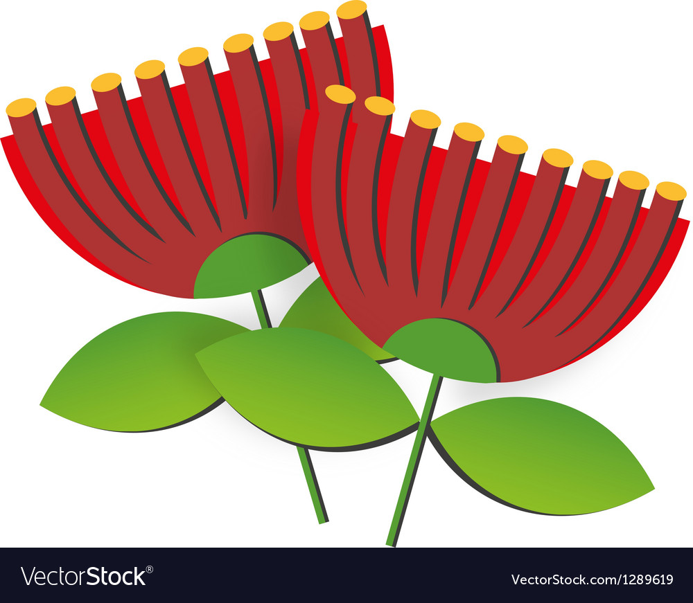 Pohutukawa flower vector | Price: 1 Credit (USD $1)
