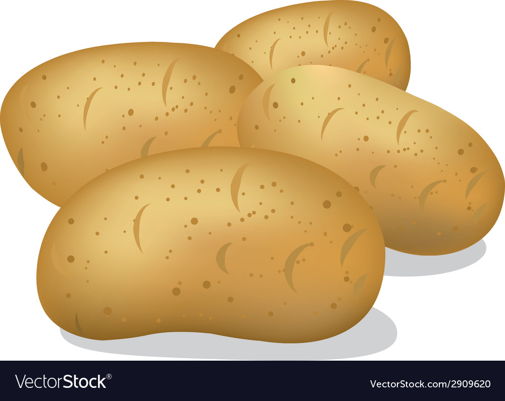 Raw potato vector | Price: 1 Credit (USD $1)