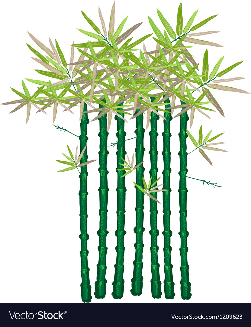 A beautiful isometric of green bamboo plants vector   Price: 1 Credit (USD $1)