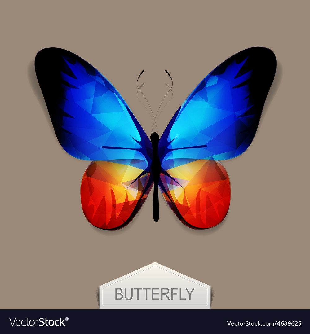 Butterfly with blue-orange wings vector | Price: 1 Credit (USD $1)