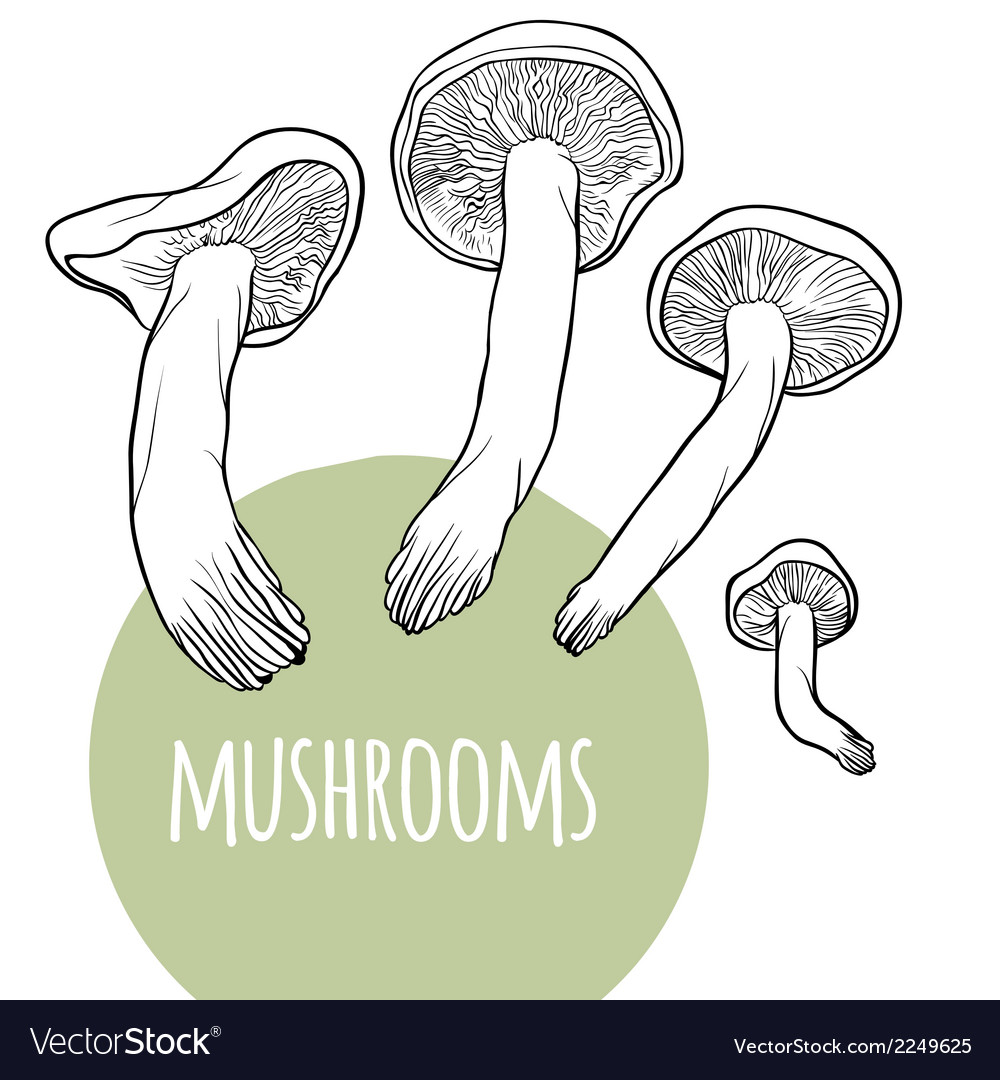 Set with black and white mushrooms vector | Price: 1 Credit (USD $1)