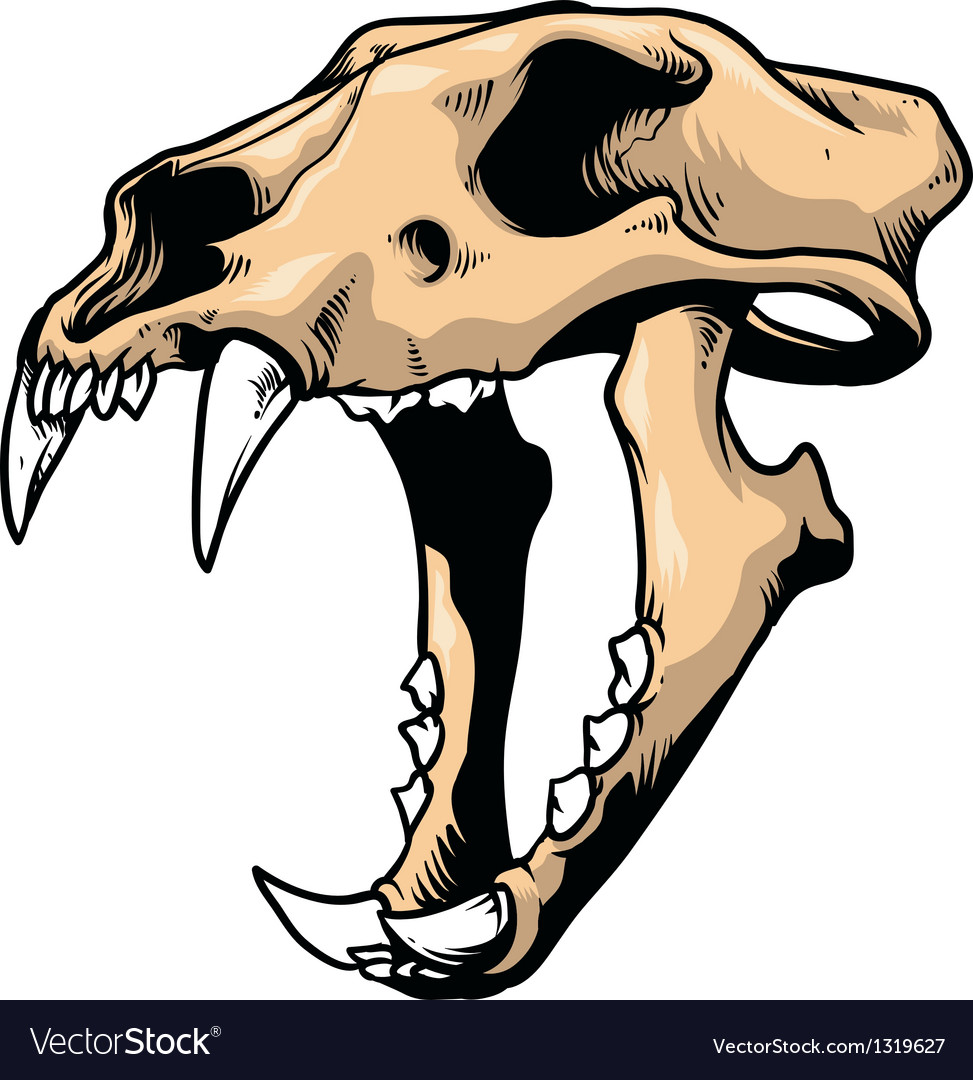 Tiger skull vector | Price: 1 Credit (USD $1)