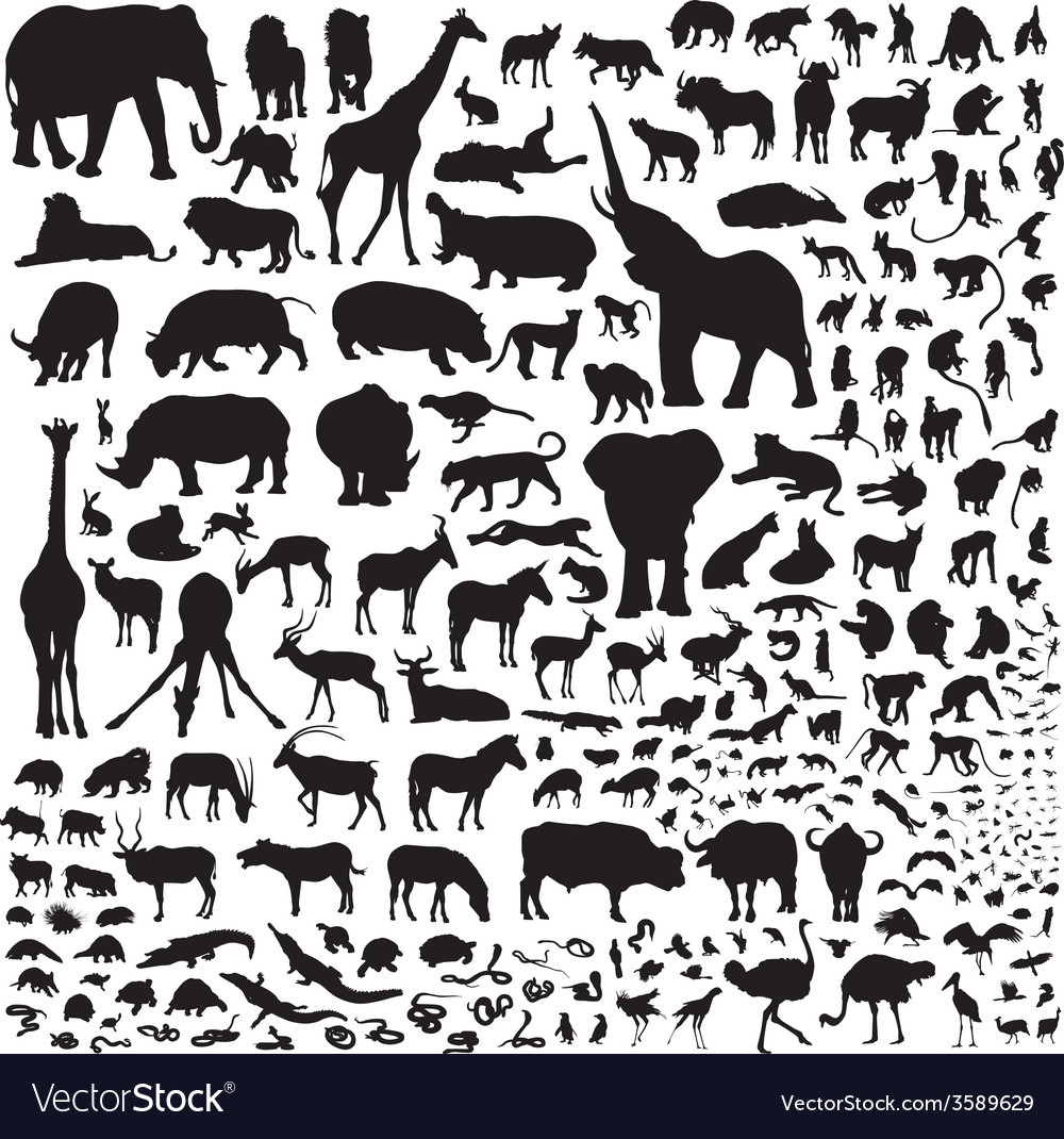 All the animals of africa vector | Price: 1 Credit (USD $1)