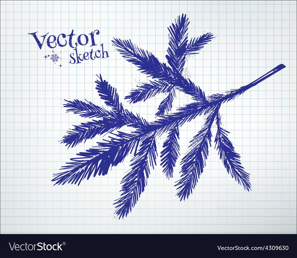Fir tree branch vector | Price: 1 Credit (USD $1)