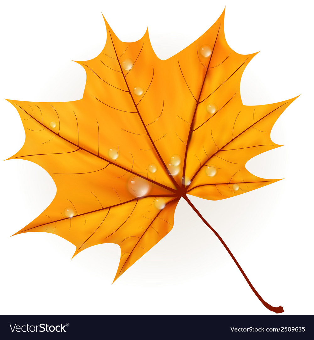 Autumn leaf isolated on white plus eps10 vector | Price: 1 Credit (USD $1)