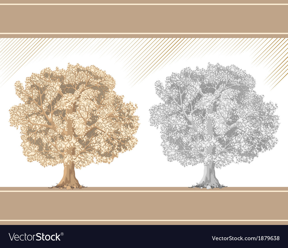 Detailed graphic tree sepia and pencil vector | Price: 1 Credit (USD $1)