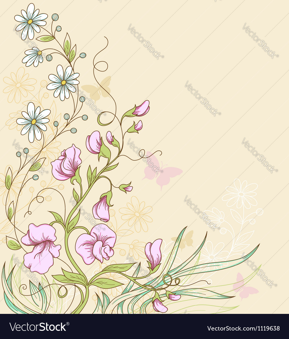 Sweet pea vector | Price: 1 Credit (USD $1)