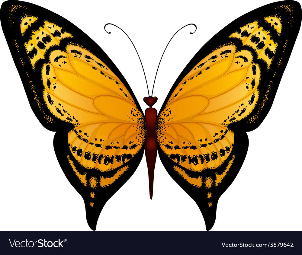 Yellow butterfly vector | Price: 1 Credit (USD $1)