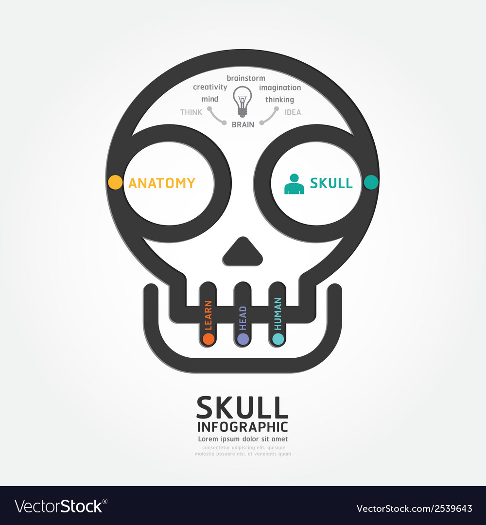 Infographics skull and brain design diagram line vector | Price: 1 Credit (USD $1)