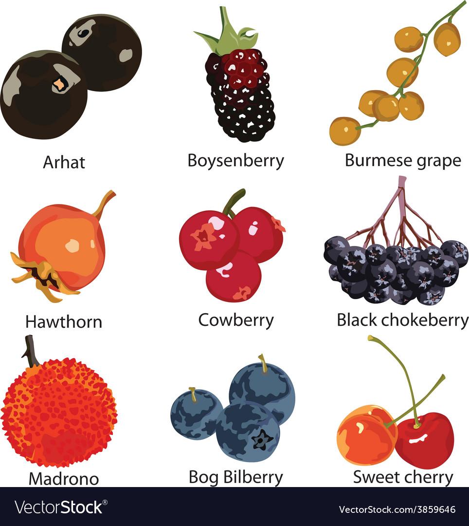 Set of different berries vector | Price: 1 Credit (USD $1)