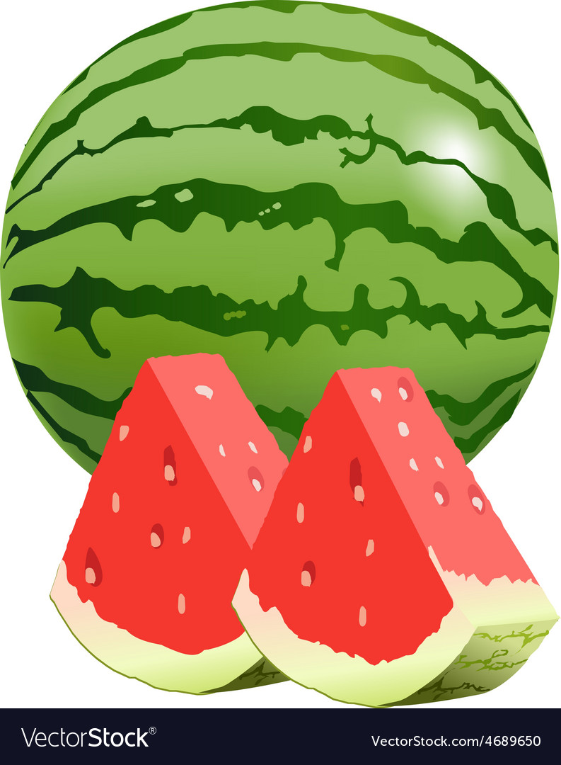 Watermellon vector | Price: 1 Credit (USD $1)
