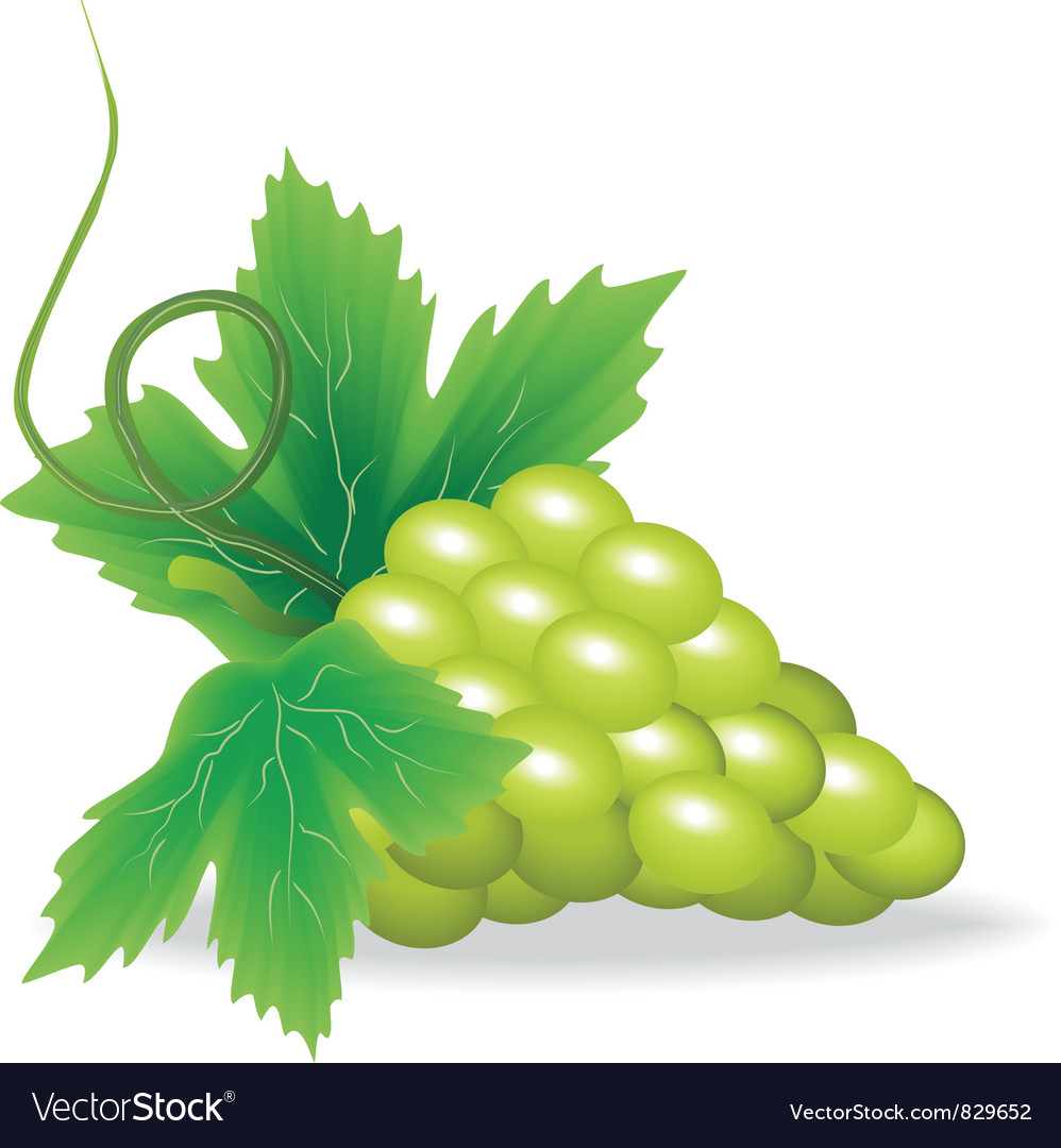 Branch of green grape vector | Price: 1 Credit (USD $1)
