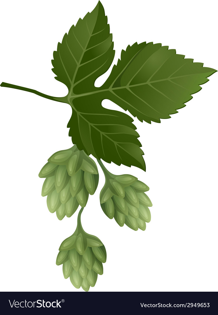 Hop brunch vector | Price: 1 Credit (USD $1)