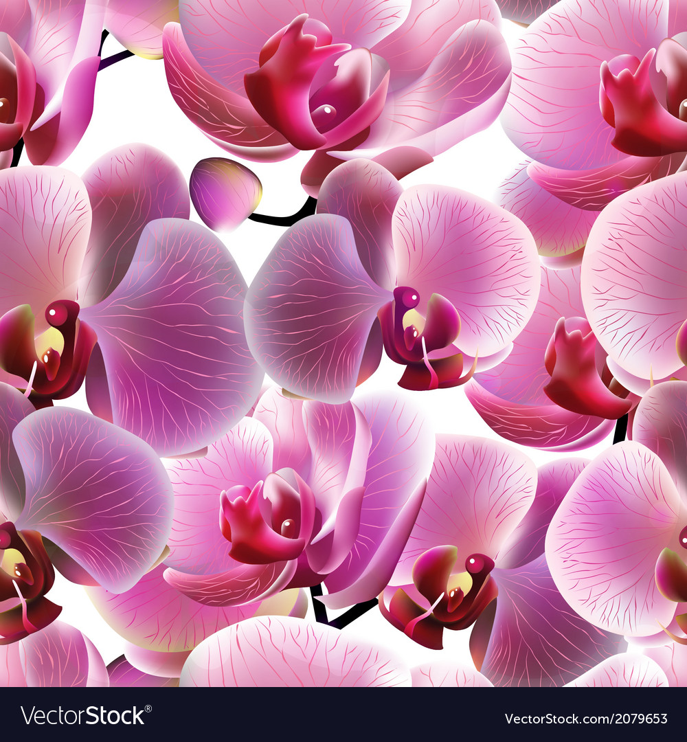 Orchid seamless pattern  eps10 vector | Price: 1 Credit (USD $1)