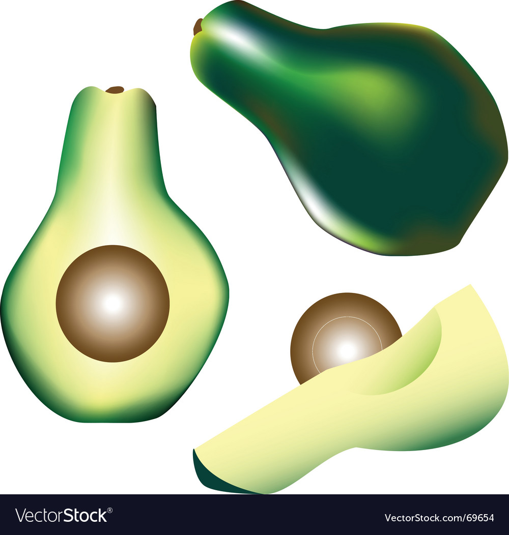 Avocado vector | Price: 1 Credit (USD $1)