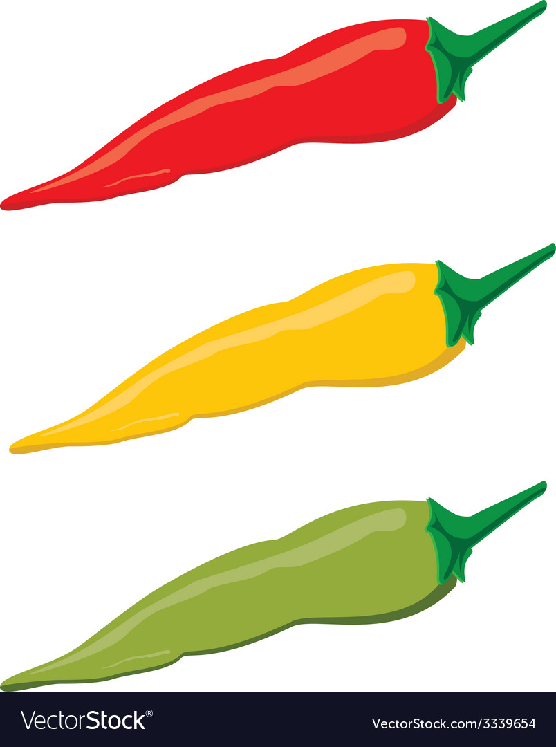 Chilli peppers vector | Price: 1 Credit (USD $1)