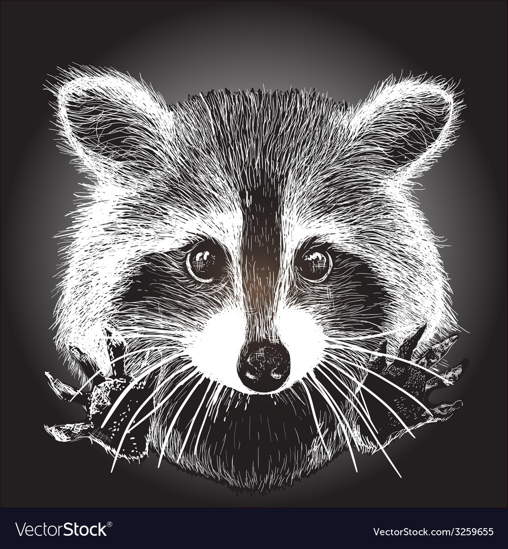 Hand drawn raccoon vector | Price: 1 Credit (USD $1)