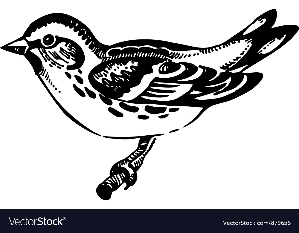 Siskin bird hand-drawn vector | Price: 1 Credit (USD $1)