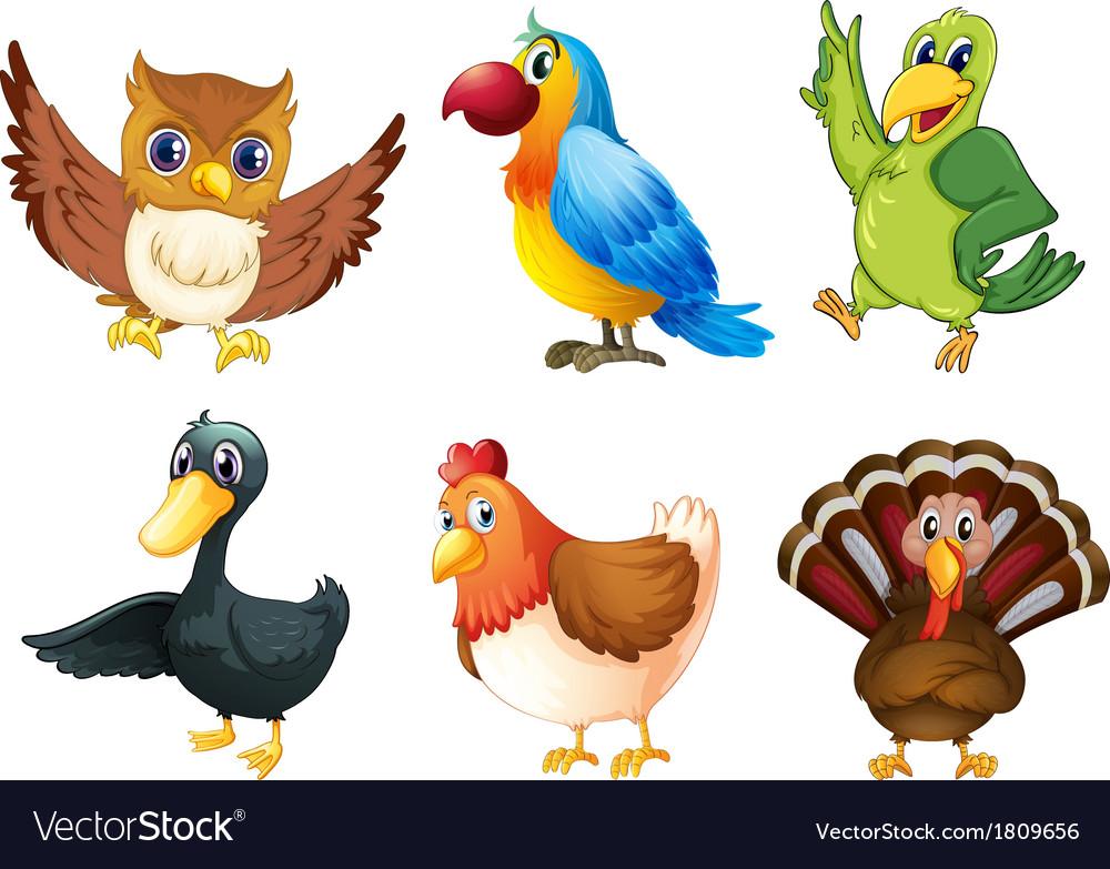 Six different species of birds vector | Price: 1 Credit (USD $1)
