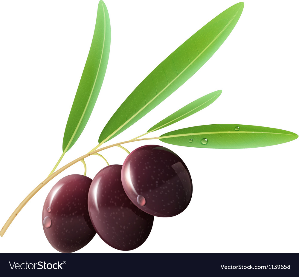 Black olives vector | Price: 1 Credit (USD $1)