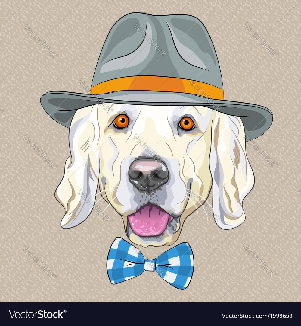 Hipster dog golden retriever vector   Price: 1 Credit (USD $1)