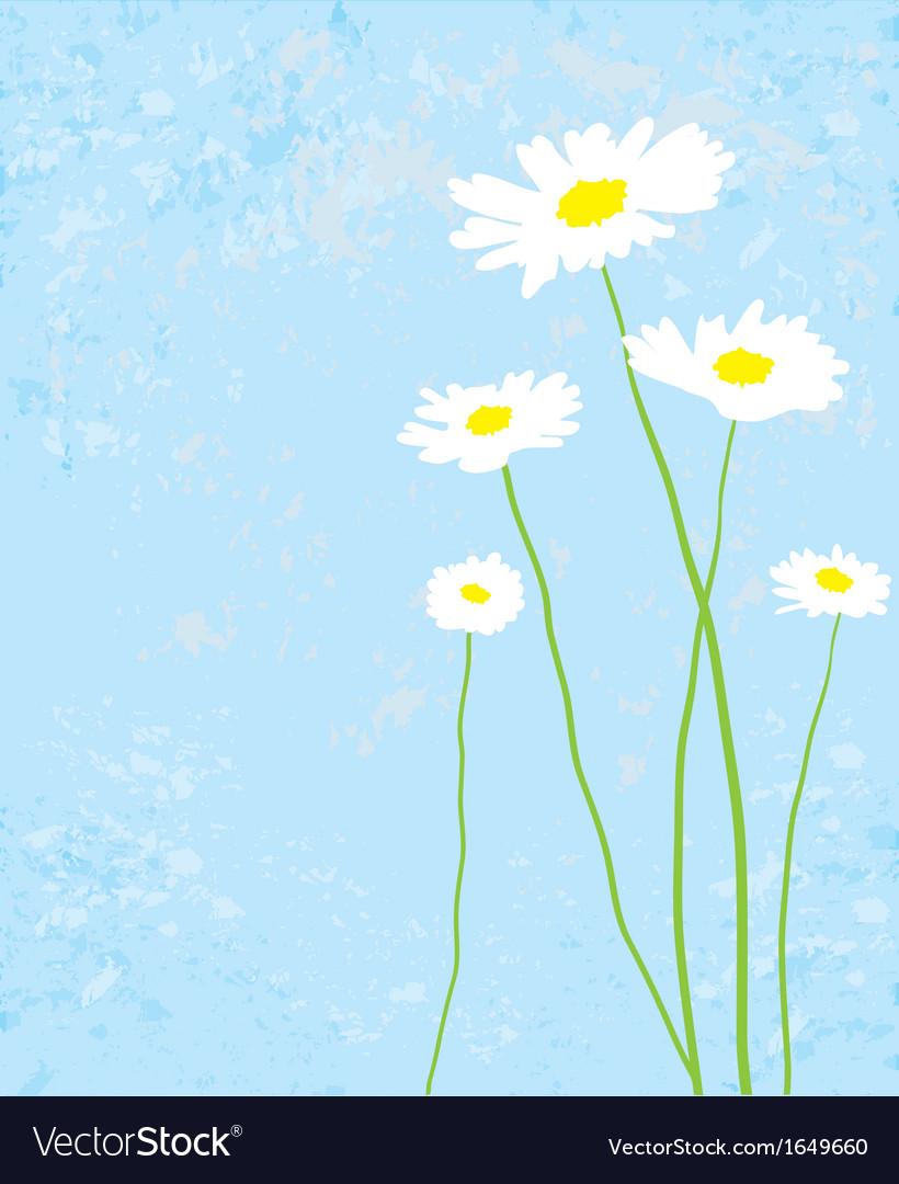 White camomiles vector | Price: 1 Credit (USD $1)