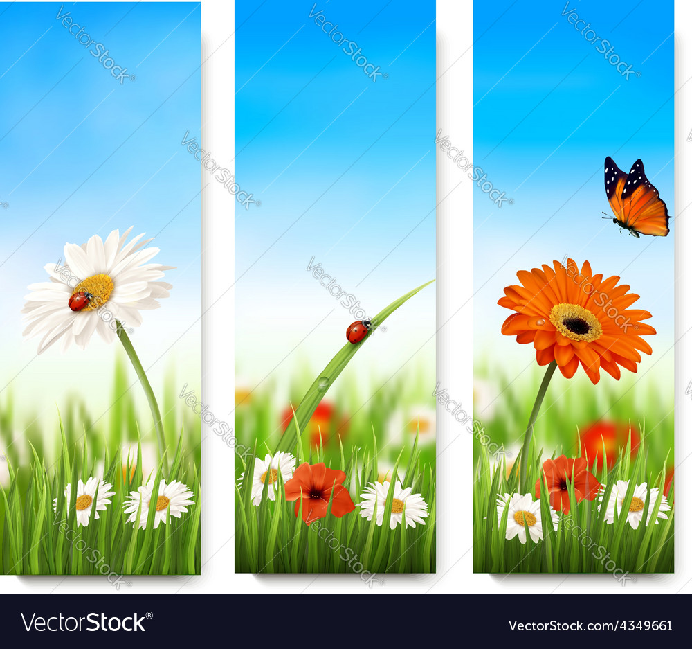 Nature summer banners with colorful flowers and vector | Price: 3 Credit (USD $3)