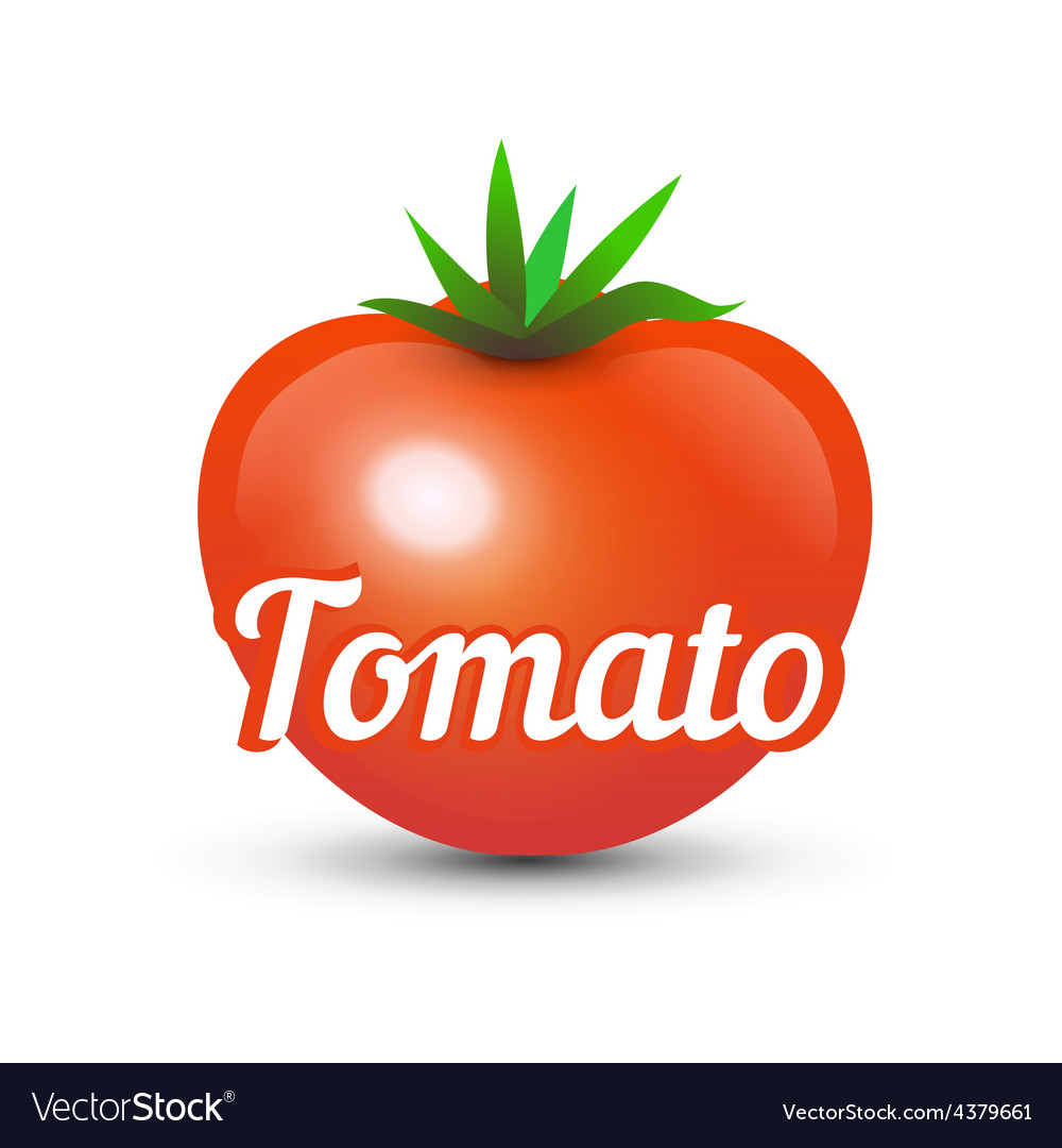 Tomato on white background vector | Price: 1 Credit (USD $1)