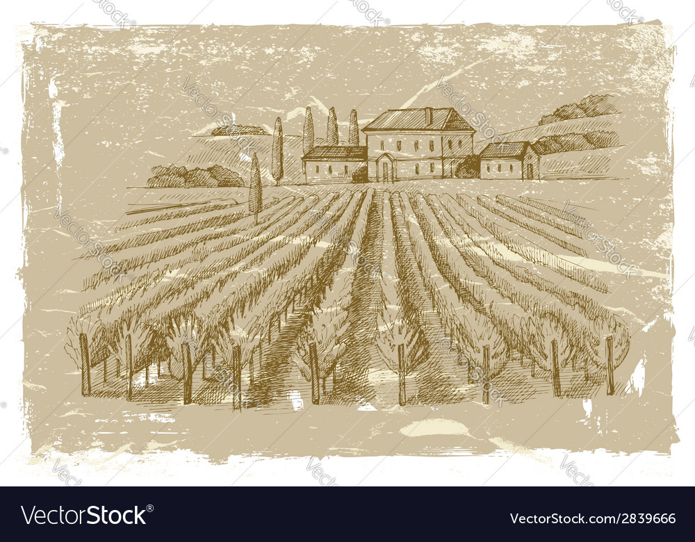 Hand drawn wineyard vector | Price: 1 Credit (USD $1)