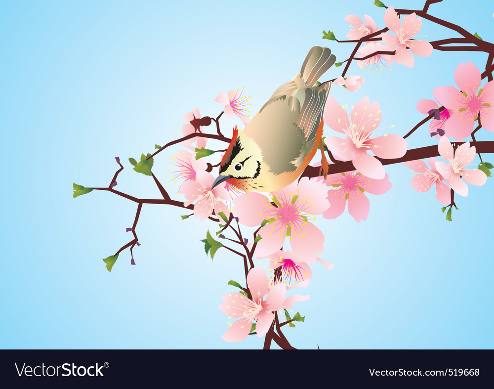 N the blossoming cherry detailed vector vector | Price: 1 Credit (USD $1)