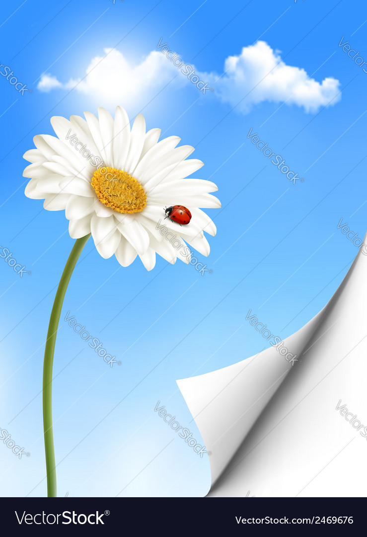 Nature summer background with daisy flower with vector | Price: 1 Credit (USD $1)