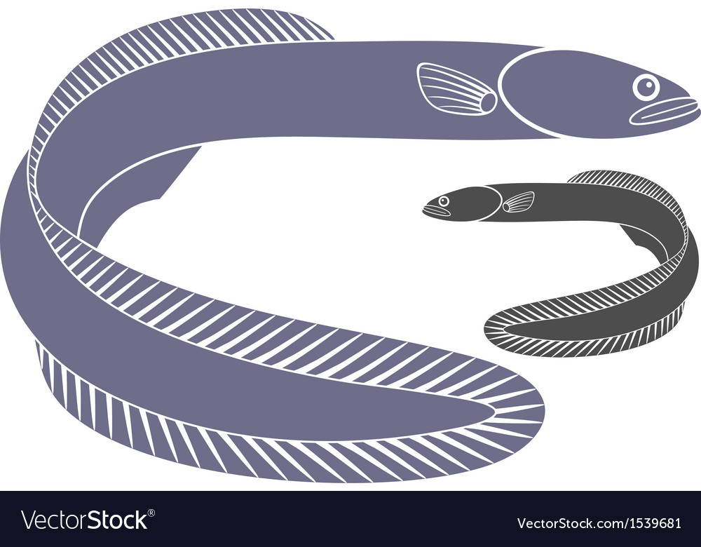 Eel vector | Price: 1 Credit (USD $1)