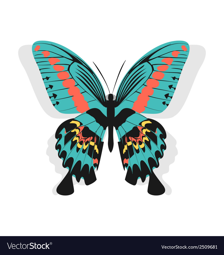 Vintage single colorful butterfly isolated on vector | Price: 1 Credit (USD $1)