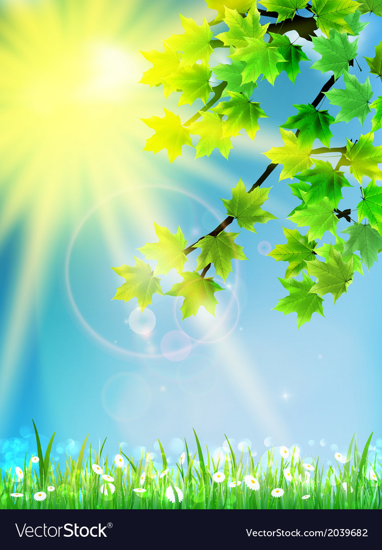 Eco background - green leaves grass bright sun vector   Price: 1 Credit (USD $1)