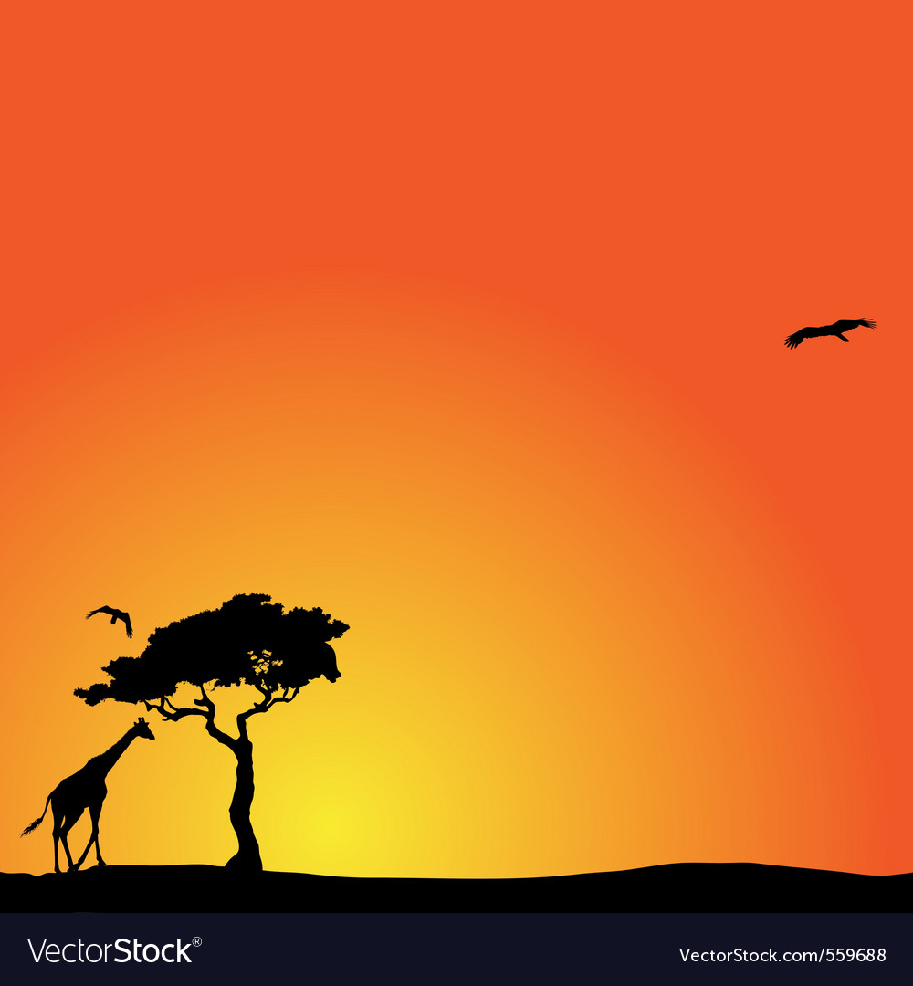 Background with african sunset vector | Price: 1 Credit (USD $1)