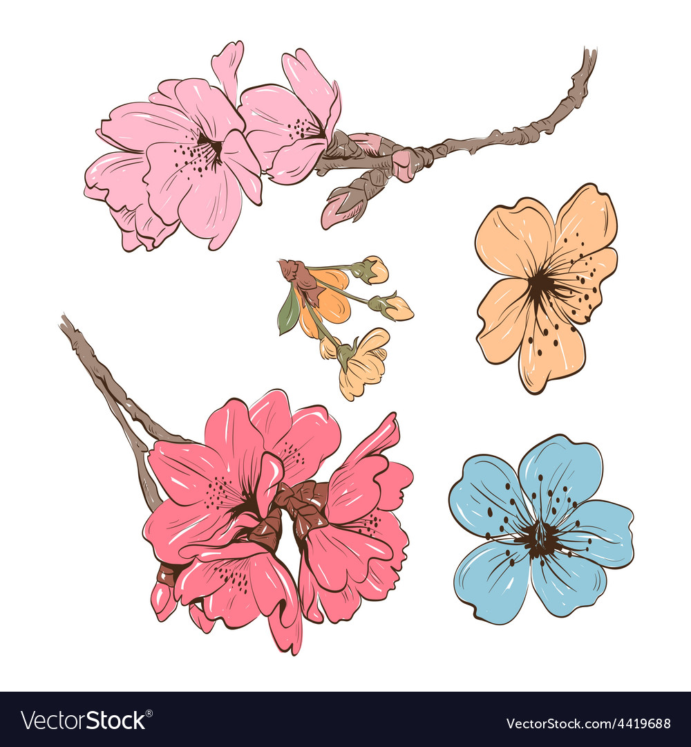 Flowers isolated vector | Price: 1 Credit (USD $1)