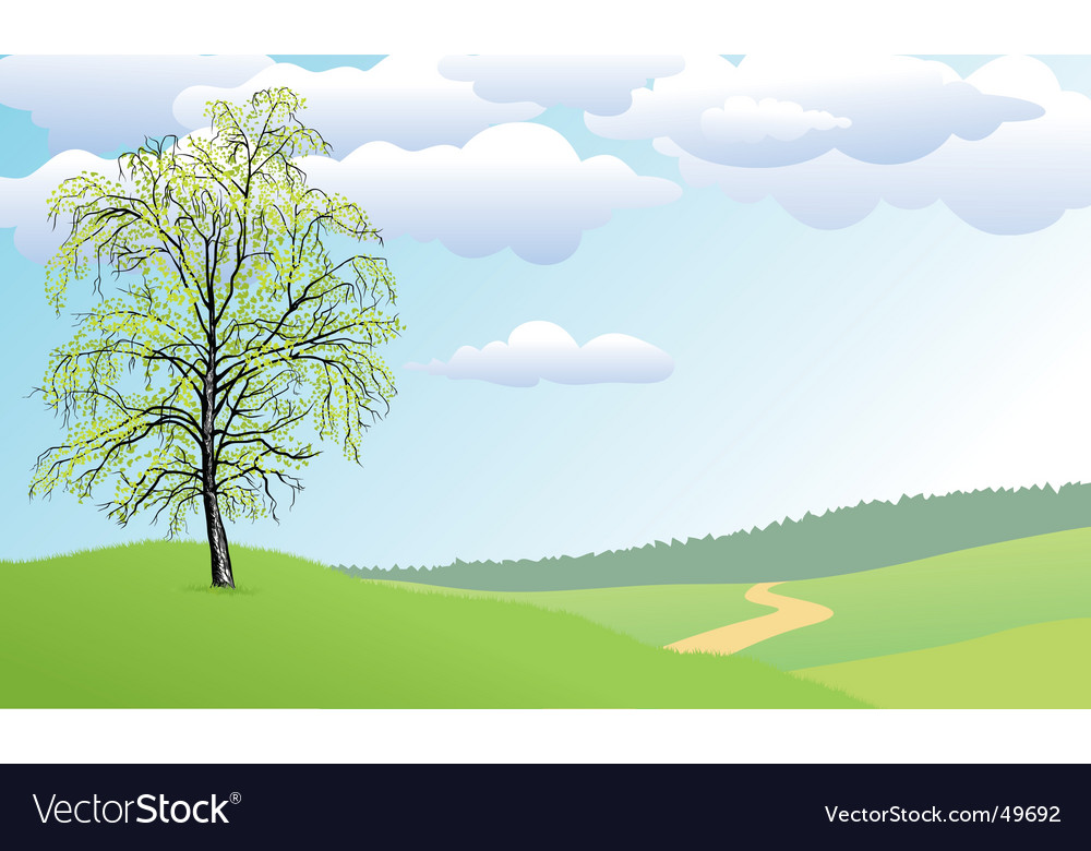Birch tree vector | Price: 1 Credit (USD $1)
