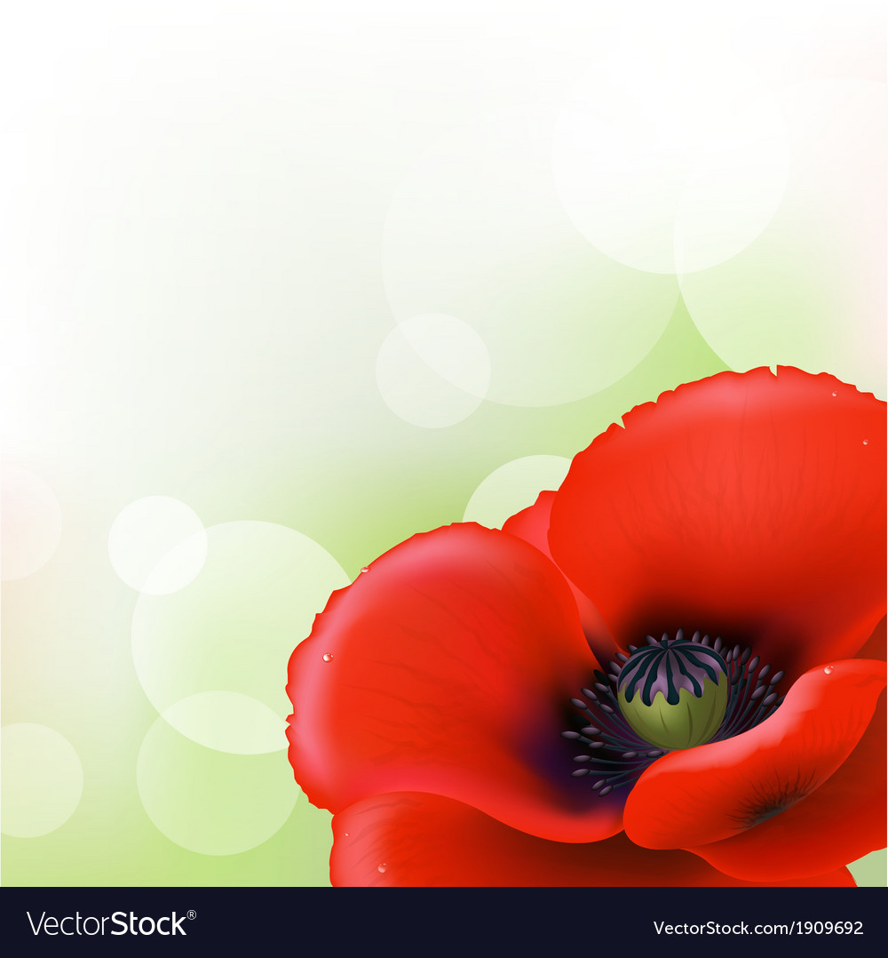 Red poppy vector | Price: 1 Credit (USD $1)