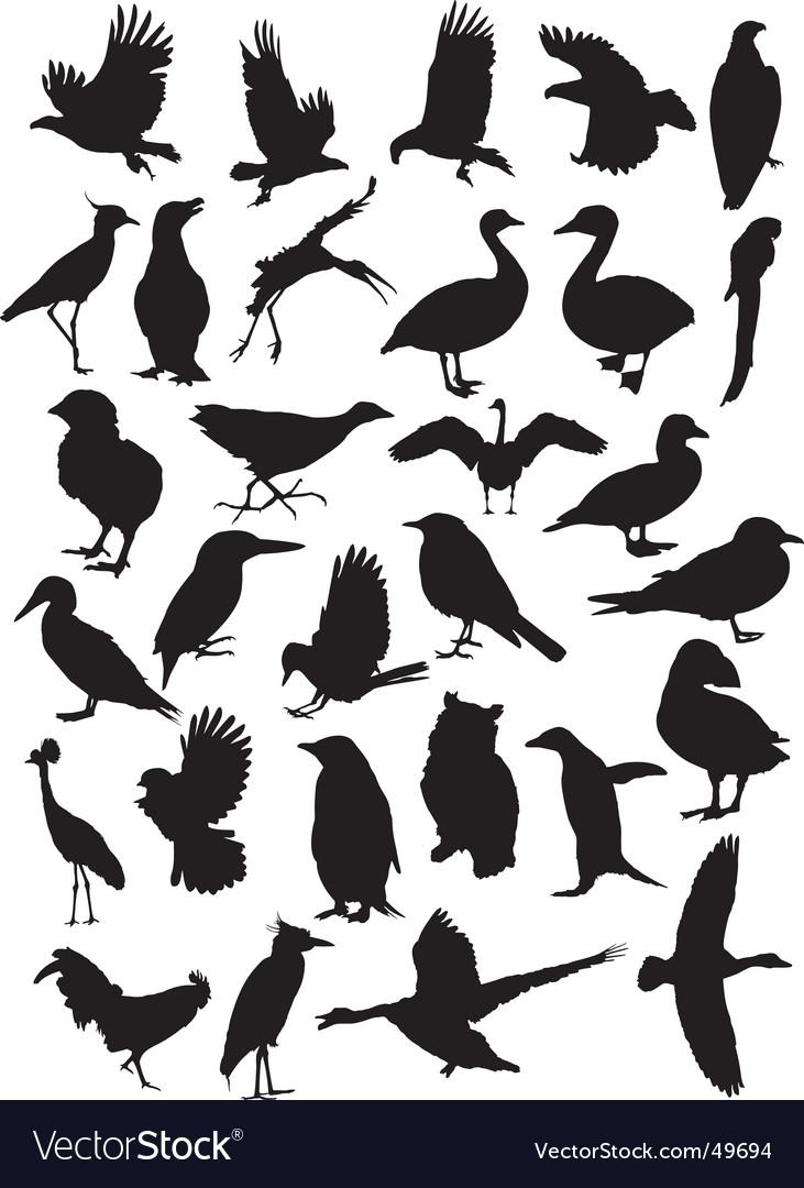 Birds silhouettes vector | Price: 1 Credit (USD $1)