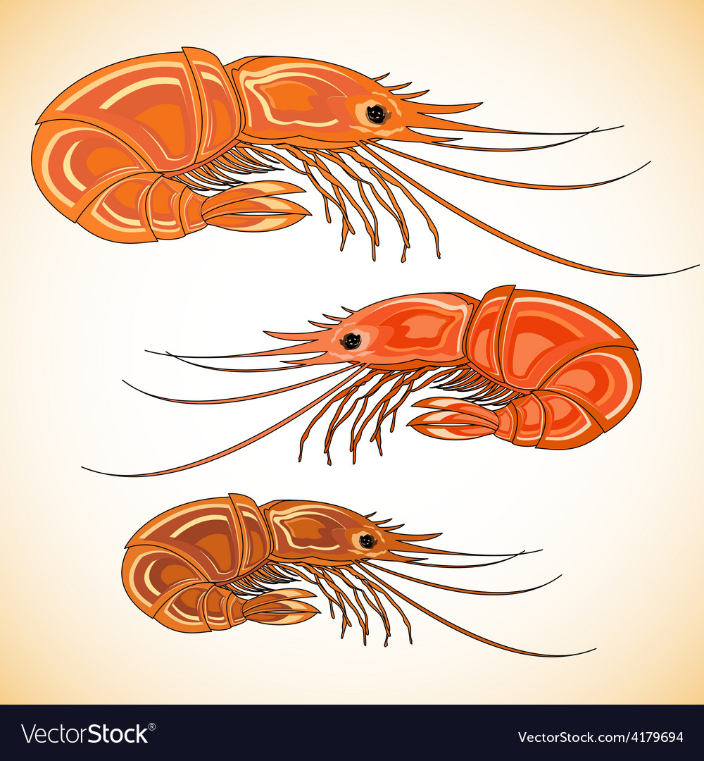 Three prepared shrimps on colorful background vector | Price: 1 Credit (USD $1)